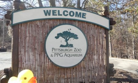 The Duck and the Pittsburgh Zoo & PPG Aquarium